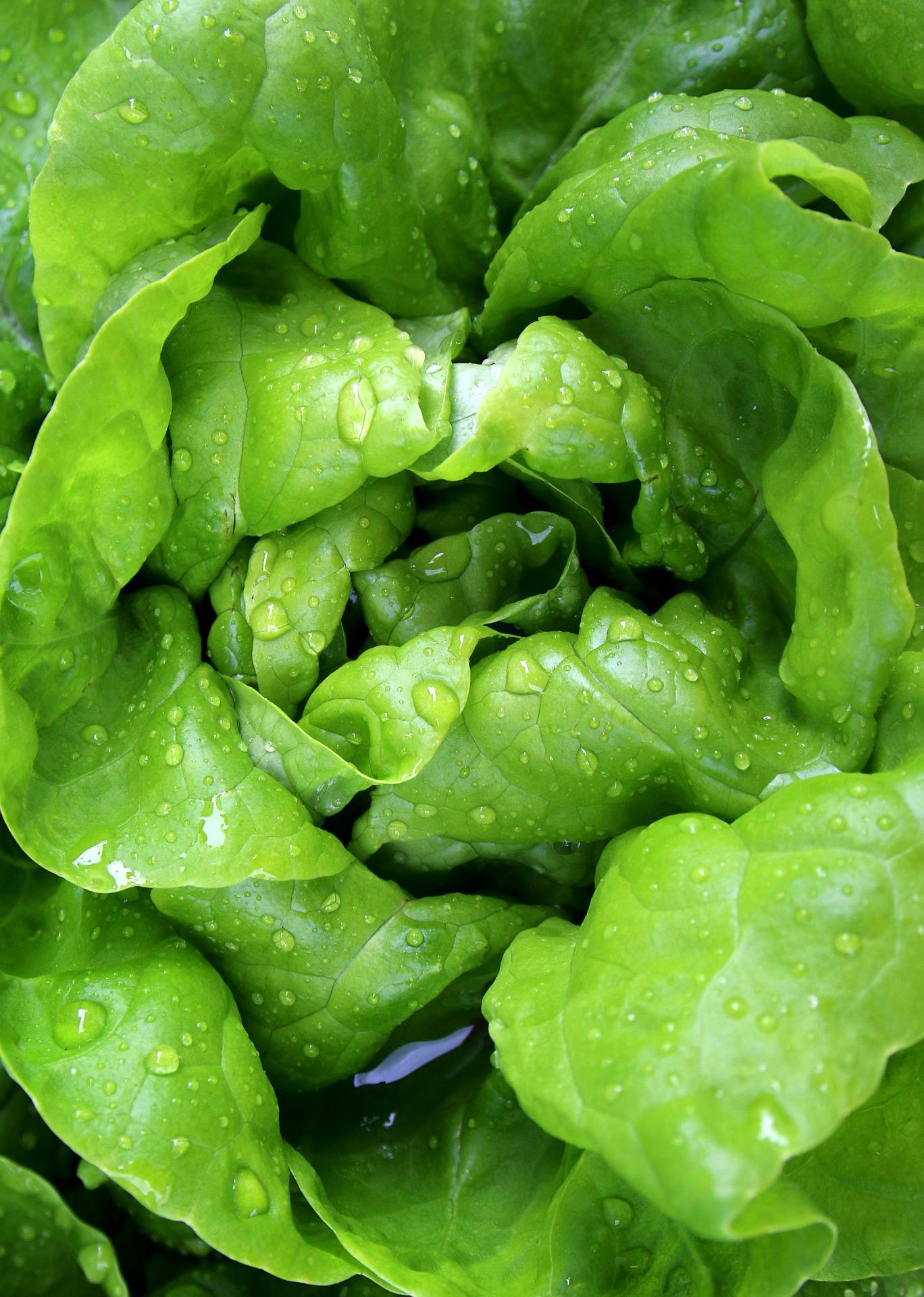 Les bons aliments pendant la grossesse : la vitamine B9 Les bons aliments pendant la grossesse : la vitamine B9